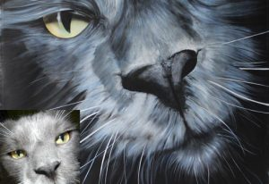 Katzenportrait, Blue-White Maincoon