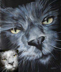 Katzenportrait Maincoon
